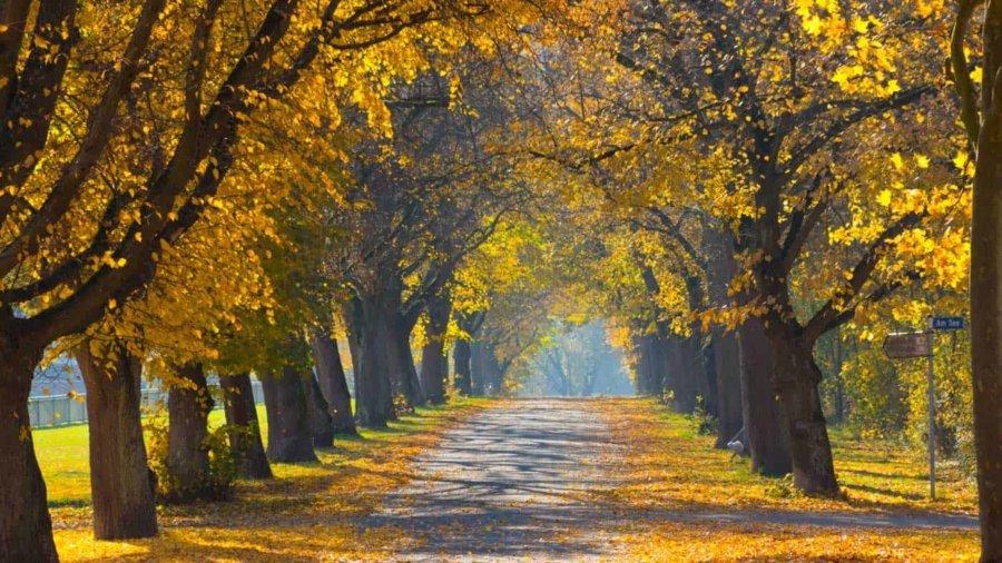 autumn seasonal routines